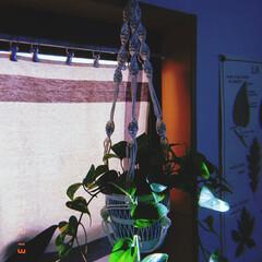 紙ひも/ポトス/グリーン/プラントハンガー/マクラメ編み/雑貨/... ハンドメイド✨ マクラメ編みの プラント…