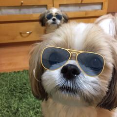 哲人/ペロ/ペット/犬 この、遠近感たまらない( ̄∇ ̄)