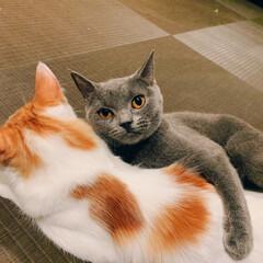 猫カフェ/猫/にゃんこ同好会 ペットショップの猫カフェは猫ちゃんが人に…