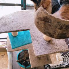 女の子/住猫/1階/タワーマンション/仔猫/ムギワラ猫/... またまた保護しちゃいました😊 6月23日…(3枚目)
