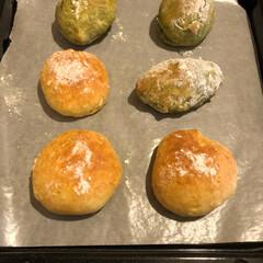 パン/縞三毛/ここね/フォロー大歓迎/ペット/ペット仲間募集/...  あ〜つまんニャい❣️  パン作り始めた…