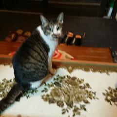 猫/我が家のアイドル/トイレ/今日の顔 こんにちは今日は☔です。  もともと野良…