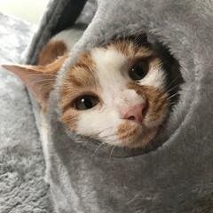 ねこ/猫/ペット/元野良猫/家族/可愛い/... たまにはこんな可愛いこともしちゃうハチ君