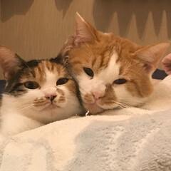 猫/うちの子ベストショット ラブラブなの。いつも一緒!