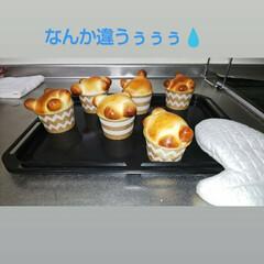 limiaキッチン同好会 孫に動物のパンを始めてつくってみた。やべ…