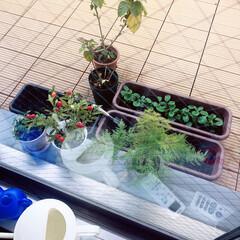 植物/ガーデニング/ベランダ/バルコニー/ルーフバルコニー/フォロー大歓迎/... ルーフバルコニーがお気に入りです💓 冬だ…