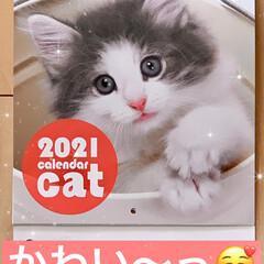 ピンポンパンポンプ〜/絵本/猫/カレンダー 契約している保険会社さんから届いた、来年…