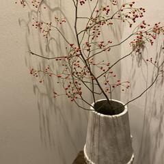 冬/日常のふとしたこと/玄関インテリア/赤い実/野いばらの実/冬の花 日々気温も下がり寒い毎日。 寒くなって嬉…