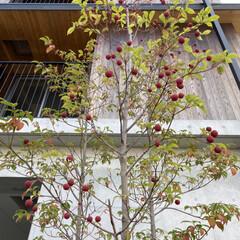 日常のふとしたこと/木の実/散歩中 散歩中に見つけた木の実 赤いボンボン と…