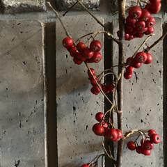 日常のふとしたこと/赤い実/冬 もう一つの赤い実  こちらは少し大粒で房…
