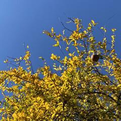 日常のふとしたこと/ザクロ/散歩日和/晴天/紅葉 ここ最近本当にお天気が良くて日中はお散歩…