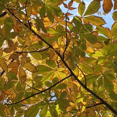 日常のふとしたこと/テキスタイル/散歩/紅葉 散歩中の公園にて  テキスタイルっぽい紅葉