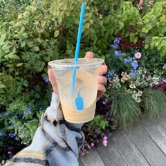 カフェ巡り/カフェ/ラテ/ブルーボトルコーヒー ブルーボトルコーヒー。青のアイコンとスト…