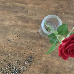 NOGA ミニミルスレッド M0602C70.45ISO(散水ホース、リール)を使ったクチコミ「お気に入りにテーブルに、ごましおを大量に…」