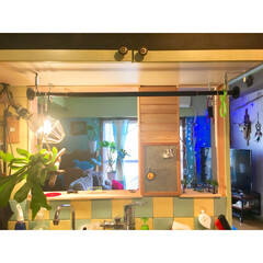 ウッドタイル/吊り下げ/ビカクシダ/コウモリラン/リビング/壁をぶち抜く/... キッチンの壁をぶち抜いたら お茶碗を洗い…(1枚目)