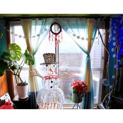 窓/株分け後/モンステラ/斑入り/ポインセチア/イルミネーション/... 遠くから写すと、光の加減で すぐ半透明化…(1枚目)