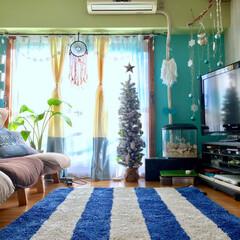 カラフル/海を感じるインテリア/流木/ドリームキャッチャー自作/黄緑の壁/水色の壁/... 2016年クリスマス