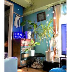 海を感じるインテリア/珊瑚/ブルーLEDクロック/ドラセナコンシンネ/窓枠DIY/黄緑の壁/... 蜘蛛の巣 いつもここに写ってます (〃ω…