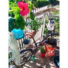 11月1日/ソーラーライト/フラミンゴ/エアープランツ/ハイビスカス/折り畳み自転車/... おはよ〜ございます♬ 今年度最低気温の今…