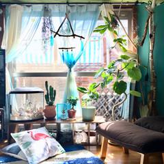 海を感じるインテリア/コウモリラン/エアープランツ/ウンベラータ/ニトリのカーテン/流木アレンジ/... 冬の間テレビで隠してた窓 ようやくベラン…