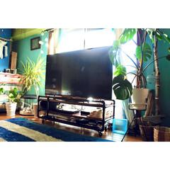 モンステラ/ドラセナコンシンネ/観葉植物/リビング/窓辺/4Kテレビ/... 観葉植物のある部屋  リビング窓際のベス…