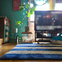 ボーダーラグ/リメイク家具/窓枠DIY/ガス管テレビ台/古いマンション/海を感じるインテリア/... 珍しくニュース見てるんで テレビ画面はボ…