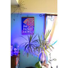 蜘蛛の巣/ワイヤークラフト/窓枠DIY/水色の壁/黄緑の壁/セルフリノベーション/... 2018年カレンダー 暫定で、この位置へ…