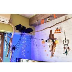 海外インテリア/水色の壁/黄緑の壁/セルフリノベーション/蹄鉄リメイク/バッファロースカル/... ~~(m゚∀゚)m 【ハッピーハロウィン…