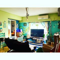 天井照明DIY/流木照明/流木/水色の壁/黄緑の壁/海を感じるインテリア/... そういえば、この家具の配置 冬バージョン…
