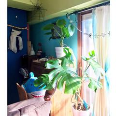 ワイヤークラフト/ウィービングタペストリー/二重窓自作/窓枠DIY/セルフリノベーション/青い壁/... 今年1番寒かった今朝の大阪 もう無理ー寒…