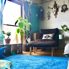 マンション/リビングの一角/リクライニングソファ/1人掛けソファ/グリーンのある暮らし/ウンベラータ/... 我が家にやってきて3ヶ月 植え替えしてか…