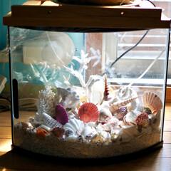 ビーチ/海を感じるインテリア/貝殻/珊瑚/水槽 いつもリビングで写り込んでる 珊瑚&貝殻…