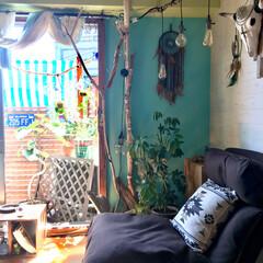 ベランダ/マンション/リクライニングソファ/1人掛けソファ/水色の壁/窓枠DIY/... 「もう育てんの面倒やねん」と言われ 実家…