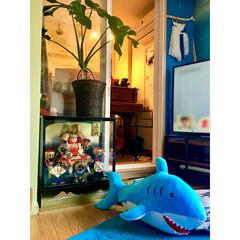 niko and…/青いラグ/サメ/ガス管 テレビ台/楽譜立て/ウィービング自作/... 実はウチにもあるんです 五月人形!! 去…