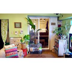 のれん/ココヤシ/観葉植物/防音室/ピアノ/黄緑の壁/... 1つ前の写真と同じアングル  2016年…