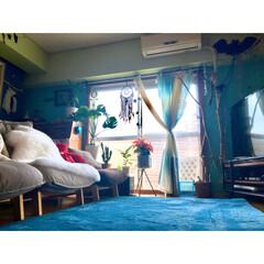 二重窓DIY/カーテンアレンジ/ホットカーペット/ムートン/フィカスアルテシーマ/ダイウンカク/... ピントを合わせるところによって 写真の雰…(1枚目)