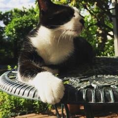 フォロー大歓迎/秋/風景/ペット/猫/にゃんこ同好会 少し久しぶりの投稿です。 この前洗濯日和…