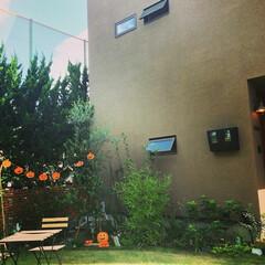 ハロウィン/ガーデン/ガーデニング/アウトドア/アウトドアリビング お庭ハロウィン🎃  お庭のグリーンに映え…