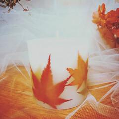 秋インテリア/押し花/ドライフラワー/紅葉/モミジ/もみじ/... 秋なので…もみじのボタニカルキャンドル♪…
