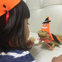 フトアゴ/フトアゴヒゲトカゲ/トカゲ/爬虫類/ペット/ハロウィン/... 3歳の娘とフトアゴヒゲトカゲのドリアンで…