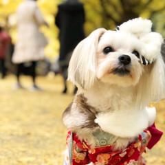 秋/風景/ペット/犬/おでかけ/ペット仲間募集/... 着崩れなんて気にしない系女子😳🌸  公園…