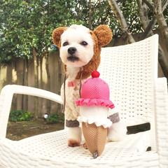 フォロー大歓迎/ペット/ペット仲間募集/犬/わんこ同好会/おでかけ 寒くなってきたのでほほるもお洋服を着る季…
