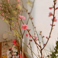 ダイニング/生花/リビングガーデン/桃の節句/Mitsuki's nasse/リビング/... 小春日和❣️ダイニングに飾った桃の花が咲…