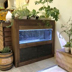 90cm水槽/観葉植物のある暮らし/水槽棚/ビルトイン水槽/水槽インテリア/水槽/... こんにちは✨  このお休みは久しぶりに大…(1枚目)