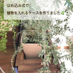 90cm水槽/観葉植物のある暮らし/水槽棚/ビルトイン水槽/水槽インテリア/水槽/... こんにちは✨  このお休みは久しぶりに大…(5枚目)