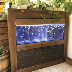 90cm水槽/水槽棚/グッピー/DIY/男前/観葉植物 こんばんは˚✧₊⁎⭐︎ 久しぶりの投稿に…(1枚目)