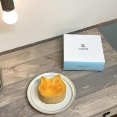 ペンダントライト/ねこねこねチーズケーキ/チーズケーキ/キッチン/カフェ風 今日はパパさんの誕生日祝い🎉 〝ねこねこ…(1枚目)