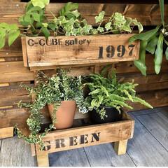 グリーンのある暮らし/インテリア/端材DIY/端材/観葉植物のある暮らし/観葉植物/... こんばんは😊 DIYを始めた頃に作った観…(1枚目)