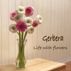 ガーベラ/花/LIMIAインテリア部/暮らし ガーベラを買ってみました😊💕 1本で買う…