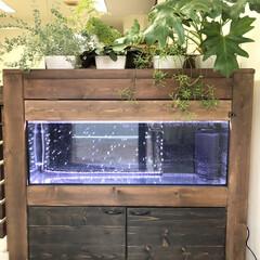 90cm水槽/観葉植物のある暮らし/水槽棚/ビルトイン水槽/水槽インテリア/水槽/... こんにちは✨  このお休みは久しぶりに大…(2枚目)